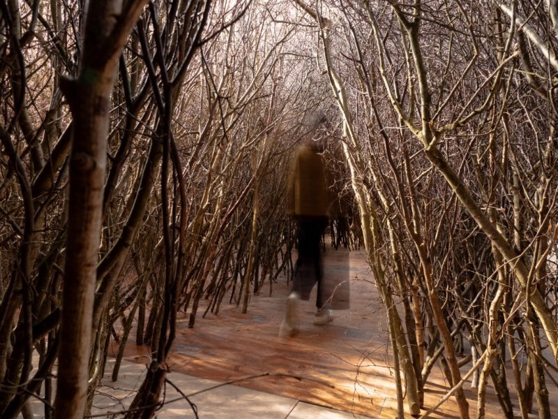 The Forked Forest Path by Olafur Eliasson