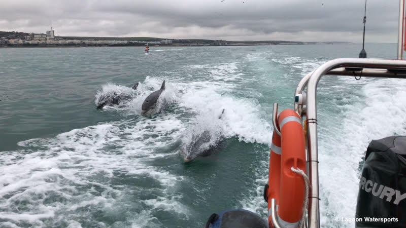 Dolphins swimming alongside a boat off the coast of brighton