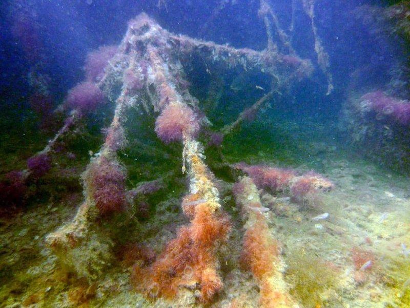 Under sea life photographed at Brighton Marina