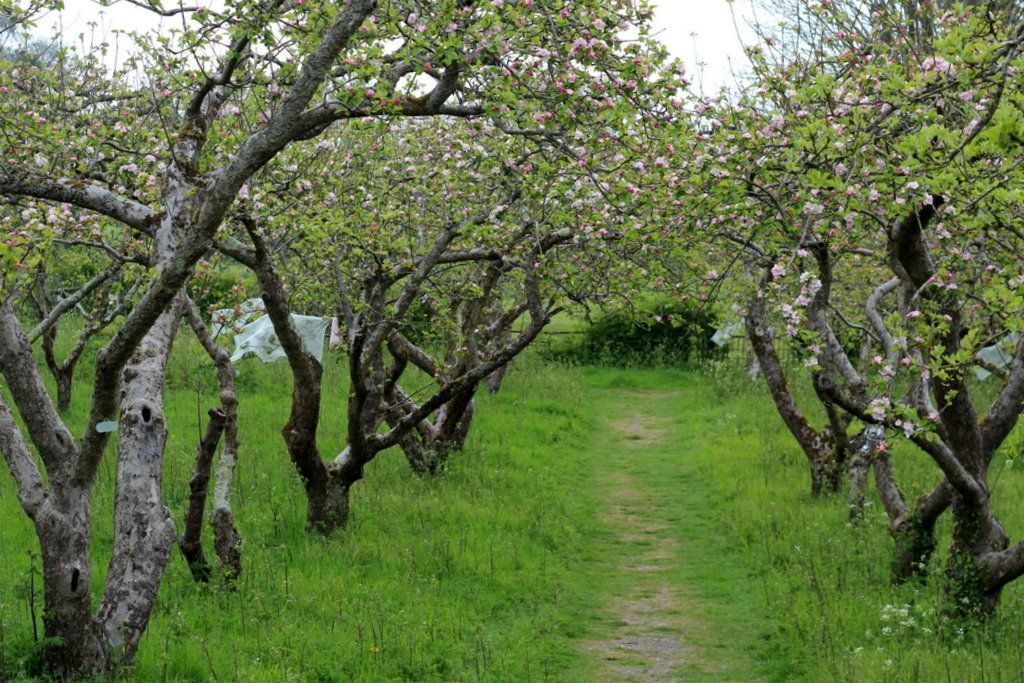 Stanmer orchard