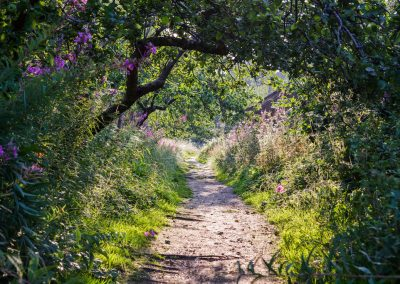 Walks and trails to follow on your phone