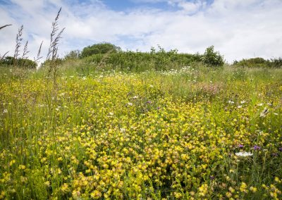 Photo by Liz Finlayson/Vervate The Living Coast, the Brighton & Lewes Downs UNESCO Biosphere Region includes land and sea from Shoreham to Newhaven. Chalk grassland in East Brighton next to Swanborough Drive