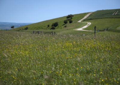 Photo by Liz Finlayson/Vervate The Living Coast, the Brighton & Lewes Downs UNESCO Biosphere Region includes land and sea from Shoreham to Newhaven. Kingston Ridge near Lewes