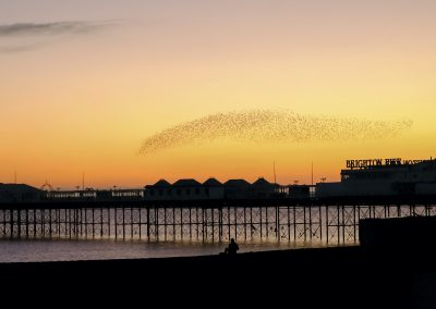 Photo by Liz Finlayson/Vervate The Living Coast, the Brighton & Lewes Downs UNESCO Biosphere Region includes land and sea from Shoreham to Newhaven. Starling Murmuration Brighton Seafront