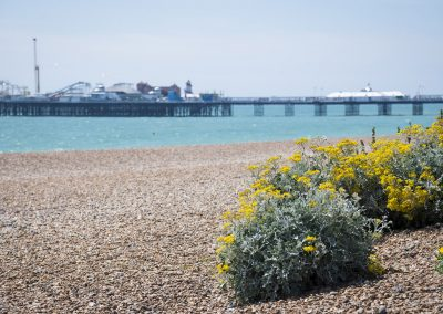 Photo by Liz Finlayson/Vervate The Living Coast, the Brighton & Lewes Downs UNESCO Biosphere Region includes land and sea from Shoreham to Newhaven. Vegetated Shingle on Brighton Beach