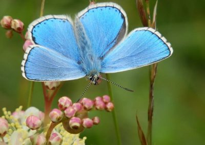 The Living Coast comes alive with summer's butterflies!